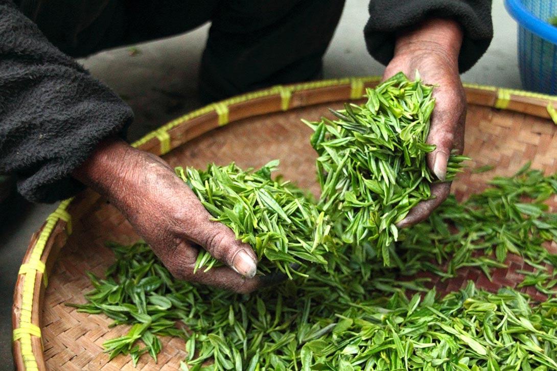 Zelený čaj a zdraví